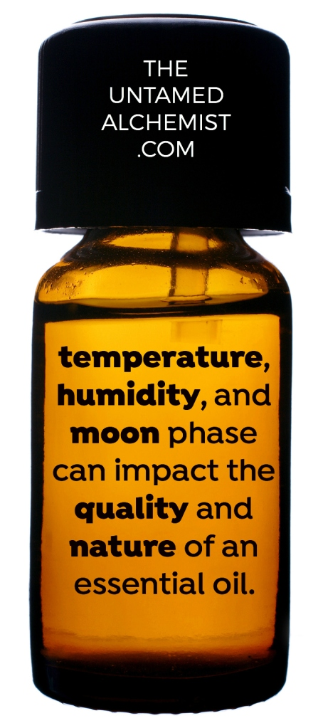 concept alternative medicine essential oils relaxation therapy