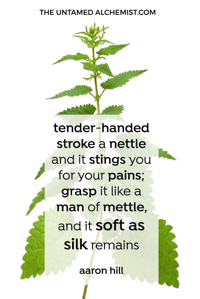 wisdom-in-brief-nettle