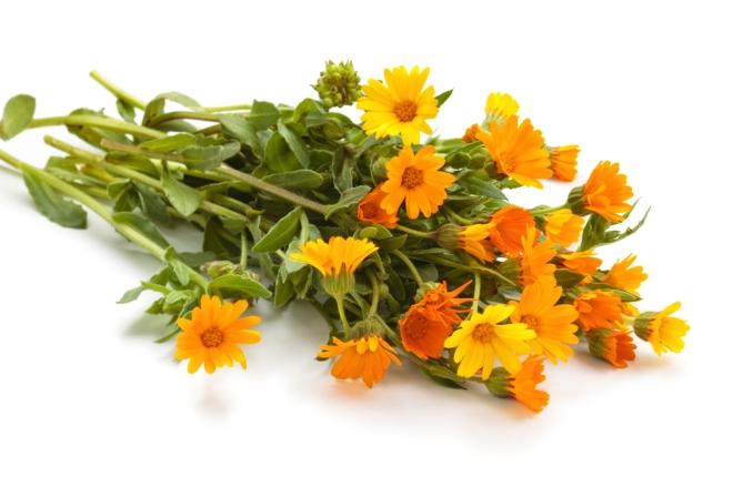 A handful of Calendula