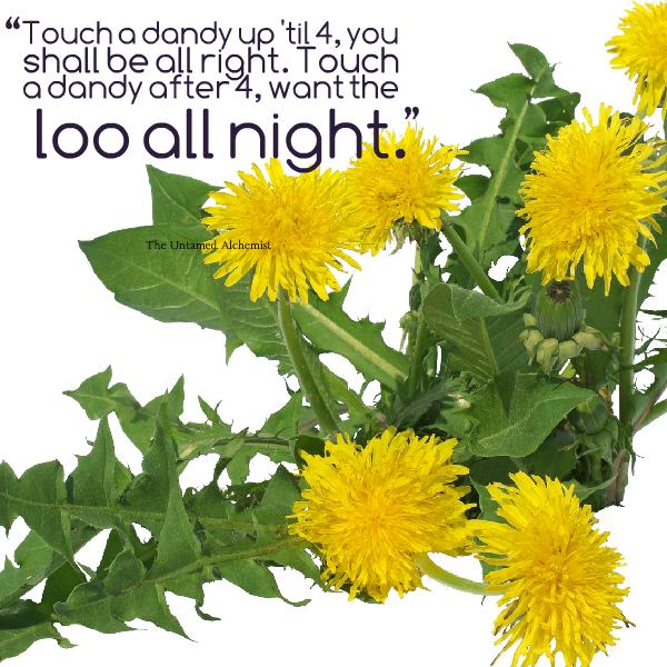 dandelion wisdom