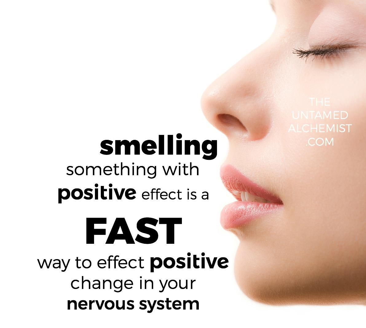 untamed fact olfaction.jpg