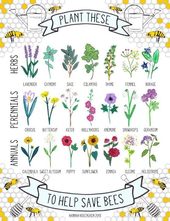 Plants for the Bees