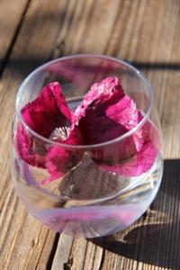 oriental poppy flower essence