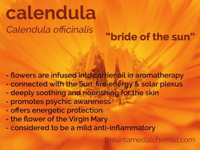 Pot Marigold or Calendula