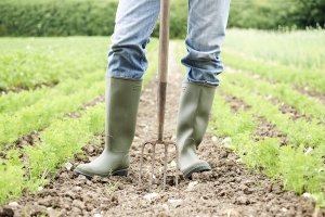 farmer in an organic field