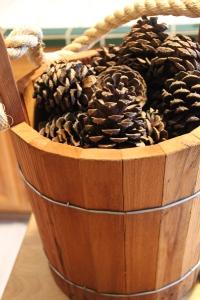 pine cones galore